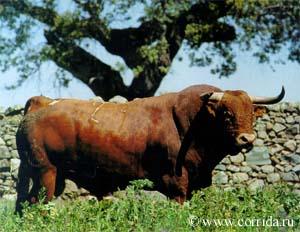 Боевой бык